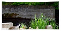 Canada Geese With Goslings Hand Towel