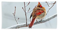 Cardinal I The Snow  Hand Towel