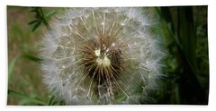 Bath Towel featuring the photograph Dandelion Going To Seed by Sherman Perry