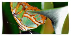 Hand Towel featuring the photograph Dido Longwing Butterfly by Peggy Franz
