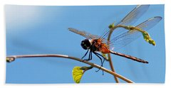 Dragonfly On A Vine Bath Towel by Kay Lovingood