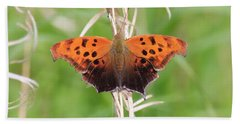 Bath Towel featuring the photograph Eastern Comma Butterfly by Penny Meyers