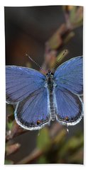 Eastern Tailed Blue Butterfly Bath Towel by Daniel Reed