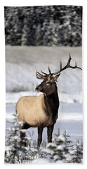 Elk Cervus Canadensis Bull Elk During Hand Towel