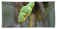 Emerald Tree Boa In Tree Costa Rica Hand Towel by Tim Fitzharris