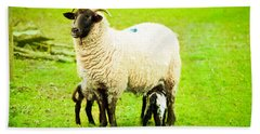 Ewe And Lambs Hand Towel