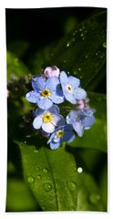 Forget Me Not Hand Towel by Ralph A  Ledergerber-Photography