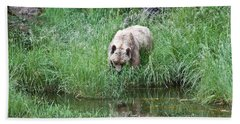 Grizzly Bear And Reflection On Prince Rupert Island Canada 2209 Hand Towel