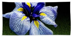 Japanese Iris Ensata - Botanical Wall Art Bath Towel by Carol F Austin