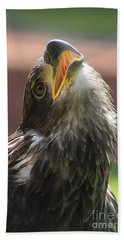 Hand Towel featuring the photograph Juvenile Bald Eagle by Alyce Taylor
