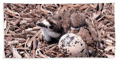 Killdeer Babies Hand Towel by Angie Rea