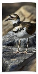Killdeer Hand Towel by Saija  Lehtonen