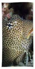 Leopard Blenny Perched On Coral, Papua Hand Towel