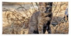 Hand Towel featuring the photograph Lone Feral Kitten by Chriss Pagani