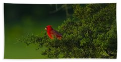 Male Cardinal In Pine Tree Hand Towel