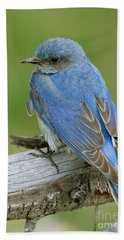 Mountain Bluebird Hand Towel by Doug Herr