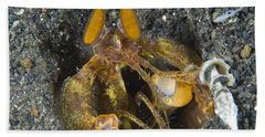 Orange Mantis Shrimp In Its Burrow Hand Towel
