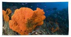 Orange Sponge With Crinoid Attached Hand Towel