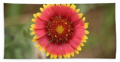 Painted Blanket Flower Bath Towel by Donna  Smith