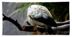 Hand Towel featuring the photograph Pied Imperial Pigeon by Davandra Cribbie