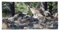 Pronghorn Antelope Fawn Hand Towel