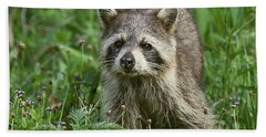 Raccoon Looking For Lunch Hand Towel by Myrna Bradshaw