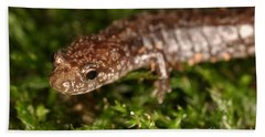 Red-backed Salamander Hand Towel by Ted Kinsman