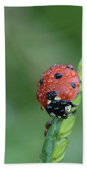 Bath Towel featuring the photograph Seven-spotted Lady Beetle On Grass With Dew by Daniel Reed
