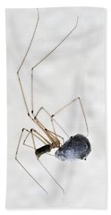 Spider Wrapping Fly Bath Towel by Matthias Hauser