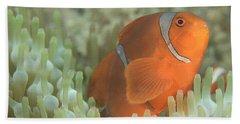 Spinecheek Anemonefish In Anemone Hand Towel