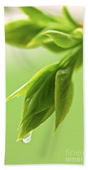 Spring Green Leaves Hand Towel