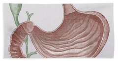 Stomach And Bile Duct Hand Towel