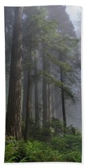 Sun Breaking On Redwoods Hand Towel