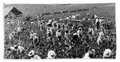 Tobacco Field In Montpelier - Jamaica - C 1900 Bath Towel
