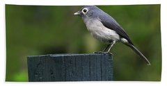 White-eyed Slaty Flycatcher Hand Towel by Tony Beck
