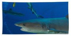 Whitetip Reef Shark, Papua New Guinea Hand Towel