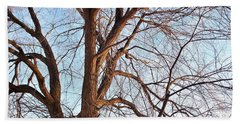 Hand Towel featuring the photograph Winter Sunlight On Tree  by Chalet Roome-Rigdon