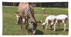 Zebra's Grazing Bath Towel