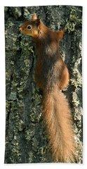 Red Squirrel  Bath Towel