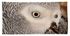 African Grey Parrot Bath Towel by Debbie Stahre