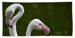 Beautiful Portrait Of Greater Flamingo Phoenicopterus Roseus Bir Bath Towel