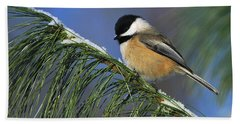Black-capped Chickadee Bath Towel by Tony Beck