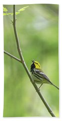 Black-throated Green Warbler Bath Towel