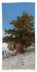 Bristlecone Pine 5 Hand Towel