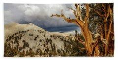 Bristlecone Pine Tree 7 Hand Towel