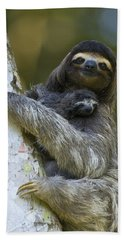 Brown-throated Three-toed Sloth Hand Towel