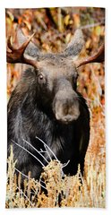 Bull Moose Hand Towel