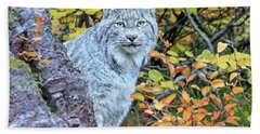 Canada Lynx Hand Towel by Jack Bell