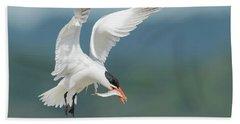 Caspian Tern With Fish Hand Towel