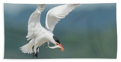 Caspian Tern With Fish Bath Towel